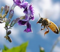 Could the bee ever be unemployed?