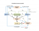 Resource circulation in the macroeconomic loop